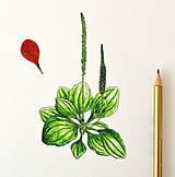 Kresby - Skorocel vo farbách - 9978590_
