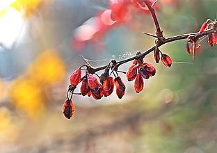 Fotografie - Jesenný II - 10031104_