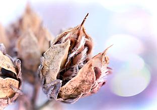 Fotografie - Medzi jeseňou a zimou - 10031136_
