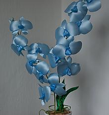 Dekorácie - Modrá orchidea - 10031186_