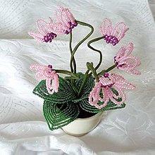 Dekorácie - Brambořík růžový - 10043523_