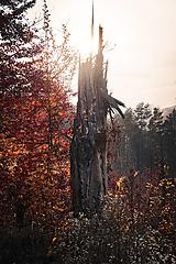 Strom bez koruny