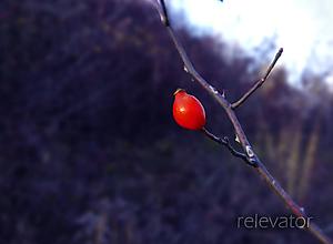 Fotografie - Statočná šípka - 10073880_