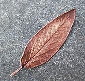 Pierka - Poměděný opravdový list šalvěje * spona do vlasů - 10089971_