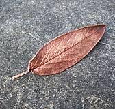 Pierka - Poměděný opravdový list šalvěje * spona do vlasů - 10089973_
