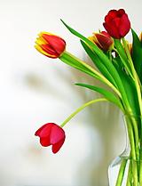 Fotografie - Tulipány V. - 10106131_