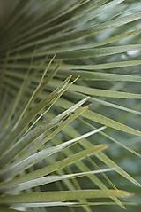 Fotografie - Flora 9014 >> Originálna fotografia na fine-art papieri - 10105313_