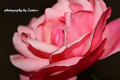 Fotografie - V ružových lupeňoch - 10113384_
