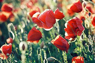 Fotografie - Flora 1704 >> Originálna fotografia na fine-art papieri - 10117598_