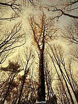 Fotografie - V lese - 10126359_