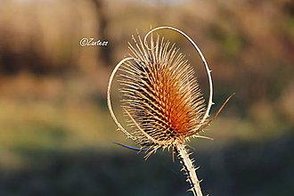 Fotografie - Fotografia... Novembrový čas - 10132126_