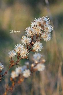 Fotografie - V-Fotografia... V jesenných farbách - 10132154_