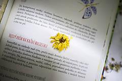 Knihy - kniha Bylinky z babičkinej záhrady - 10130878_