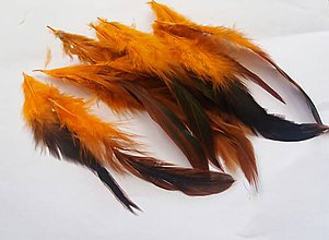 Suroviny - Kohútie perie - oranžové 20 ks - 10143522_