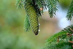 Fotografie - v lese - 10147115_