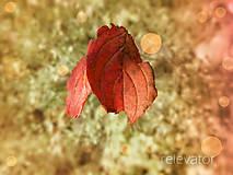 Fotografie - Jesenní priatelia - 10146019_