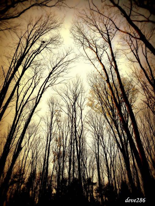 V lesnom chráme