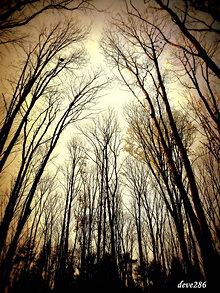 Fotografie - V lesnom chráme - 10149004_
