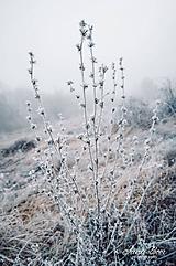 Fotografie - V zimnej krajine - 10157956_