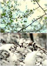 Fotografie - Kontrast - 10170781_