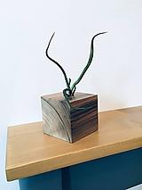 Nádoby - Orechová kocka s tillandsiou - 10170073_
