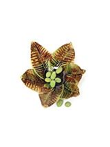 Nádoby - miska listy zeleno hnedá - 10175564_