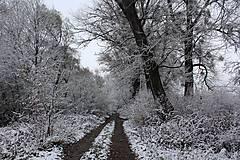 Fotografie - Zimná cesta - 10184359_