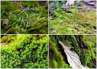 Fotografie - Prechádzka lesom... - 10191223_