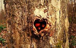 Fotografie - Srdce plné lásky - 10192389_