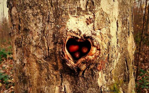 Srdce plné lásky