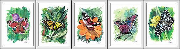 Obrazy - Príbehy motýľov - 10198766_