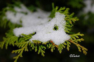 Fotografie - Fotografia... Snehom posypané - 10201018_