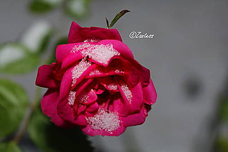 Fotografie - Fotografia... Ozdobená trblietkami - 10201066_