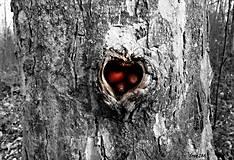 Fotografie - Srdce plné lásky ... II. - 10202872_