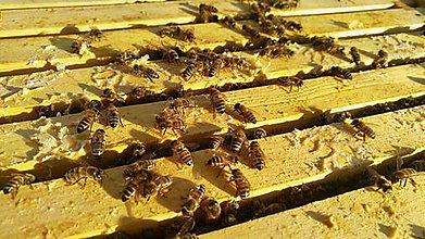 Kurzy - Návšteva pri včelách - 10203564_