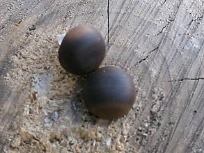 Náušnice - naušnice napichovacie,vypuklé-americký orech - 10209424_