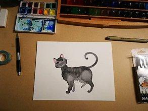 Obrazy - Kočička - 10211319_