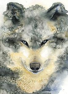 Obrazy - Vlk, akvarel výtlačok ( art print) + originál - 10211015_
