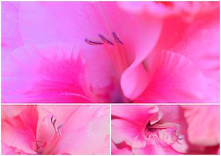 Fotografie - V opojení ružovej... - 10213302_