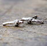 Náušnice - Větvičky do uší - 10217100_