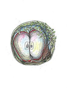 Kresby - jabĺčko - 10235020_