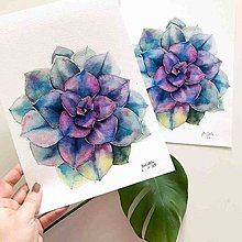 Obrazy - Sukulent I, akvarel výtlačok (print - 10239457_