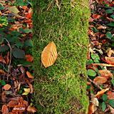 Fotografie - Jesenná sonáta - 10248809_