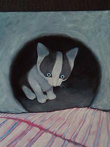 Obrazy - mačka bielo-sivá - 10247355_