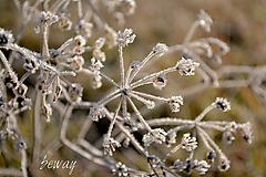 Fotografie - zamrznuté - 10251427_