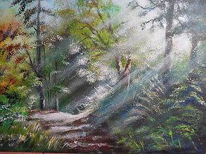 Obrazy - V slnečnom lese - 10253002_