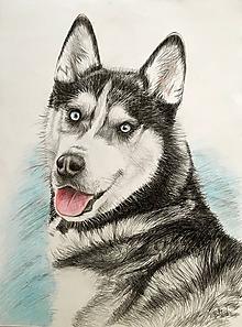 Kresby - husky - psí krásavec...A2  :-) - 10254631_