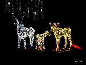Fotografie - Šťastné a veselé Vianoce Vám všetkým :) - 10257850_