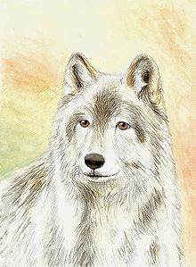 Iné - Vlčí pohľad, akvarelová maľba - 10259881_