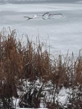 Fotografie - Zamrznuté jazero... - 10267856_